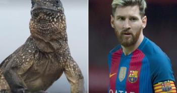 bbc-compara-las-habilidades-messi-con-las-una-iguana-1478596225692
